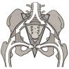 骨盤アーチ