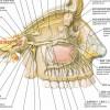 三叉神経j