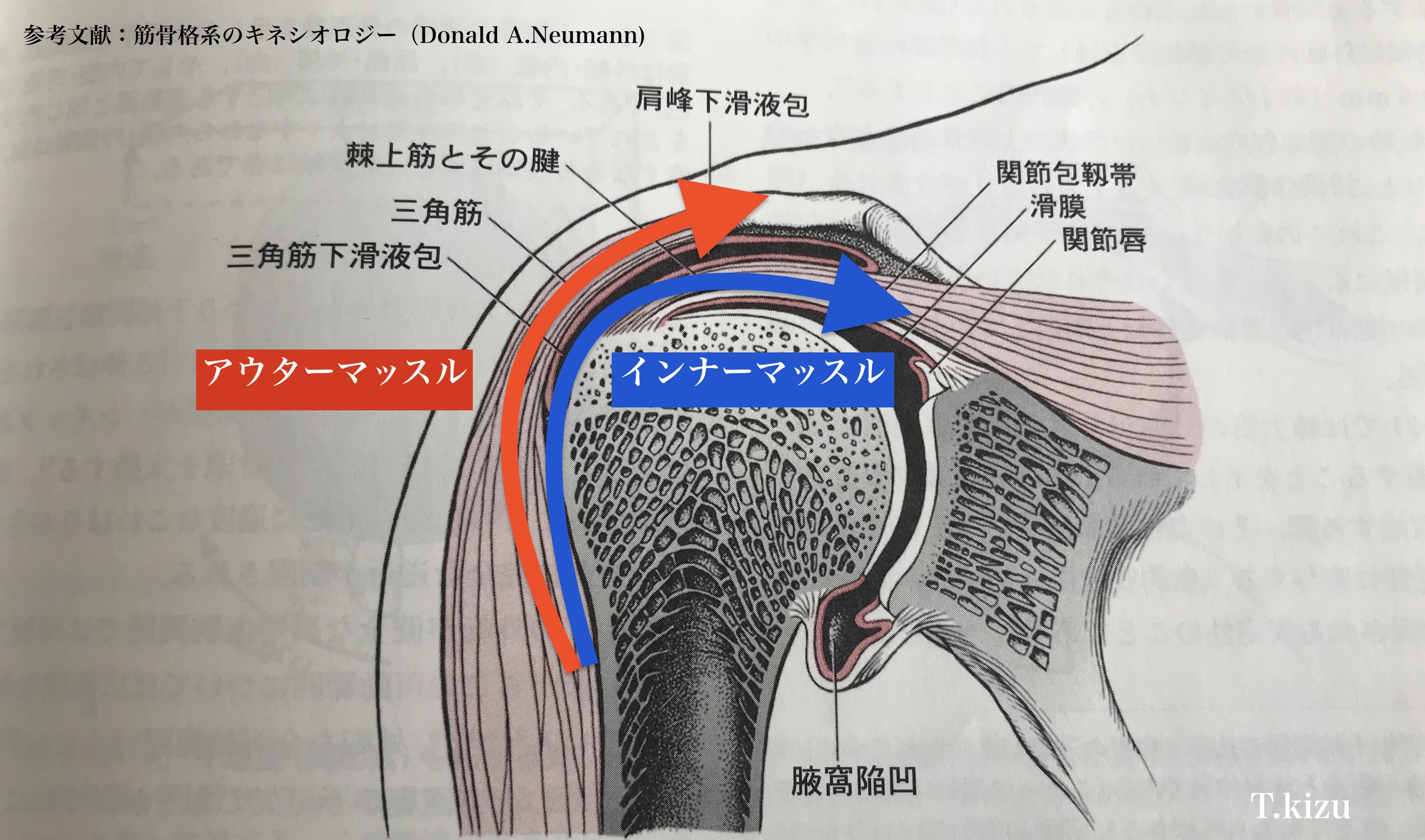 肩関節断面図メカニズム