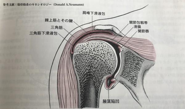 肩関節断面図