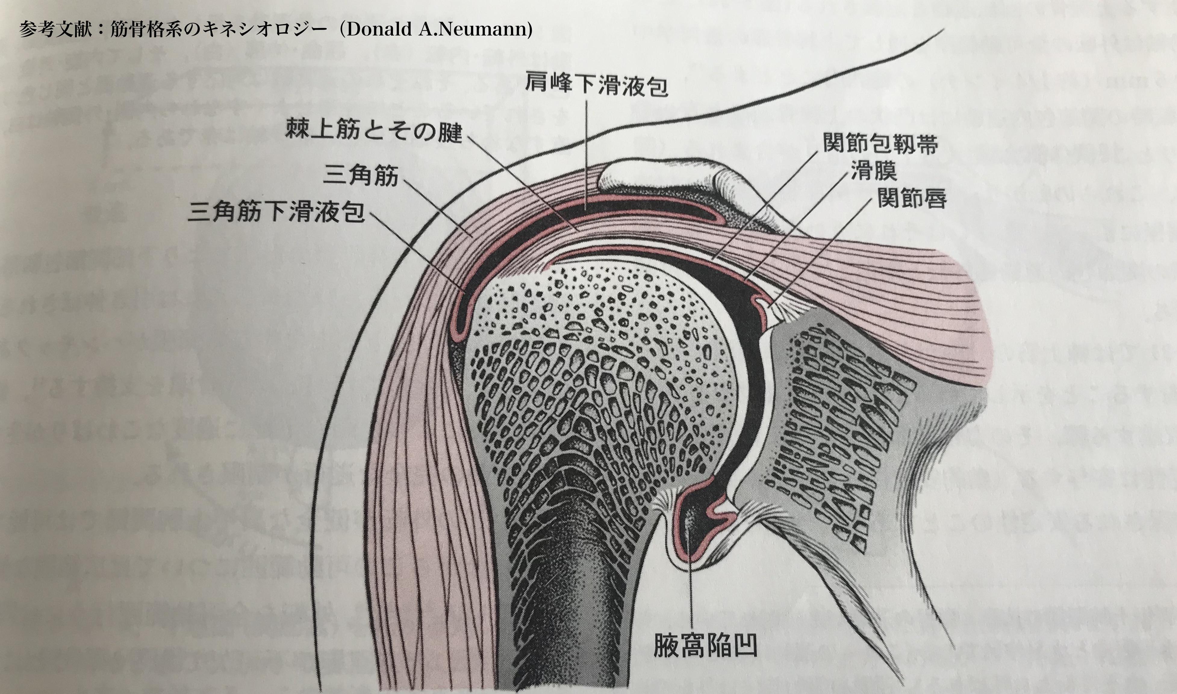 肩 関節 学会 2020