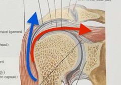 五十肩の原因考察と施術方法