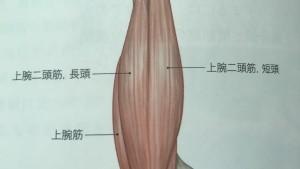 腕が痛くて上がらない(肩インピンジメント症候群)施術手順